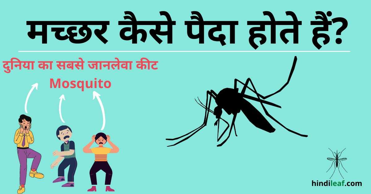 Read more about the article मच्छर कैसे पैदा होते हैं | Mosquito in hindi